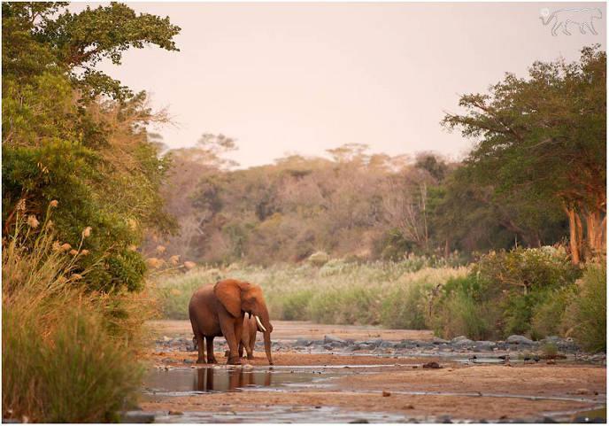 Zimanga Private Game Reserve