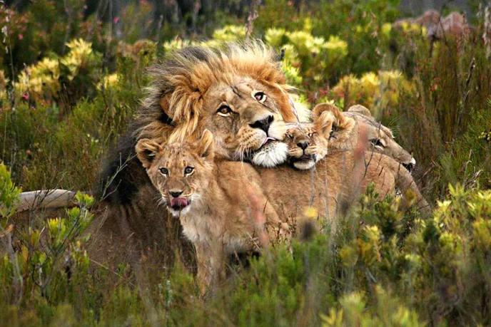 Gondwana Game Reserve lions