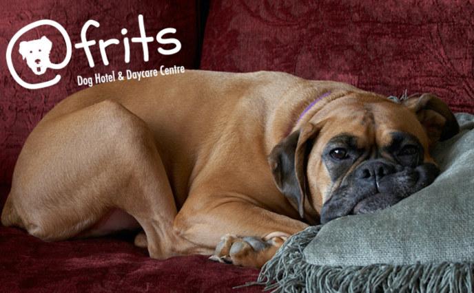 At Frits dog hotel